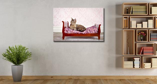 Καμβάς Γάτα Σε Κρεβάτι