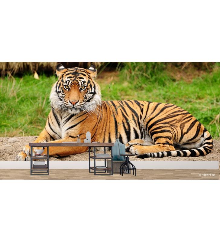 Ταπετσαρία Τοίχου Τίγρης