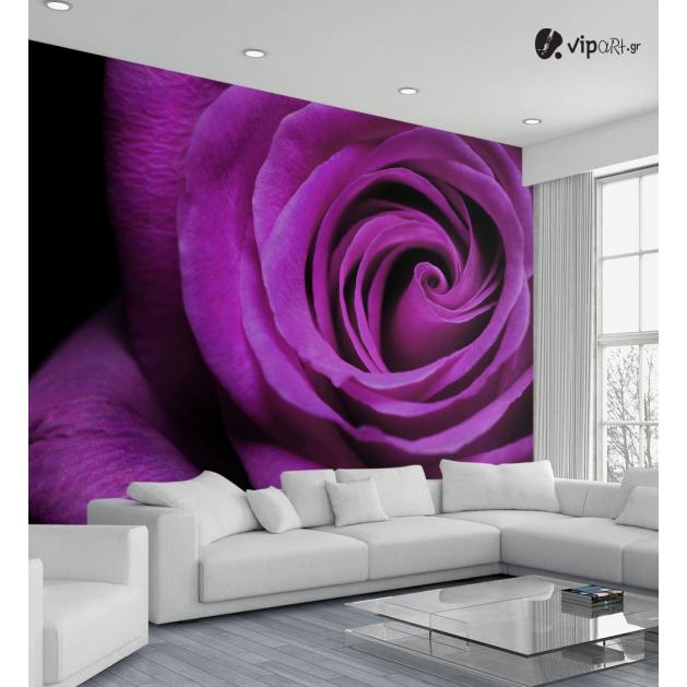 Ταπετσαρία Τοίχου  Μωβ τριαντάφυλλο - Purple rose Flower