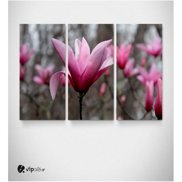 Καμβάς Τρίπτυχος Πίνακας  Μαγνόλια Λουλούδια