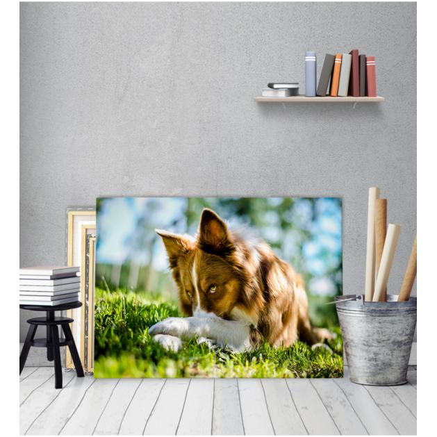 Πίνακας Καμβάς Σκύλος παιχνίδι Στο Γρασίδι