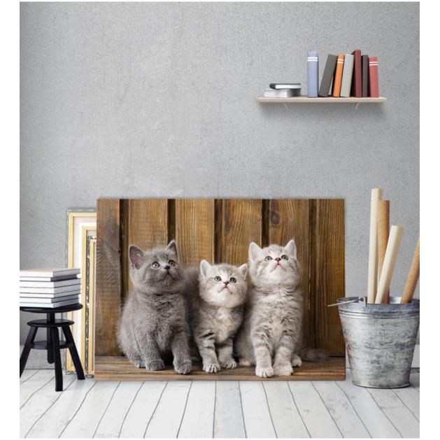 Πίνακας Καμβάς Τρία Γατάκια